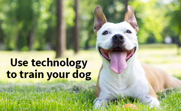 Train your dog the high-tech way