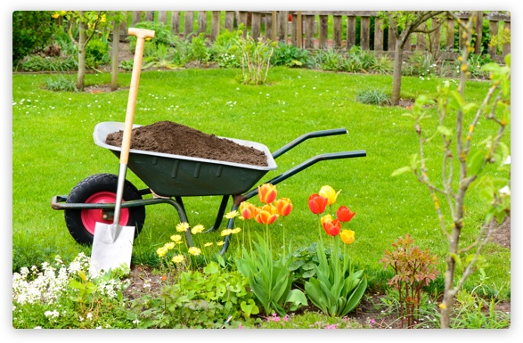 wheelbarrow in garden